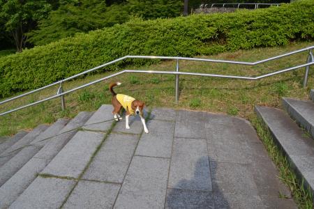 01120531富士見台公園03