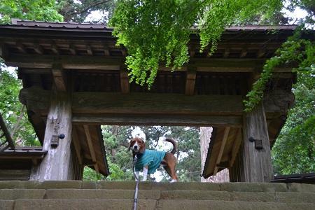 20120605飯高寺05