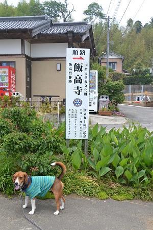 20120605飯高寺01