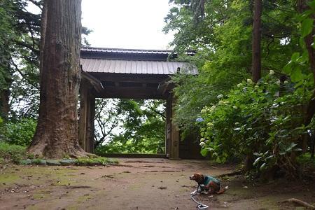 20120605飯高寺09