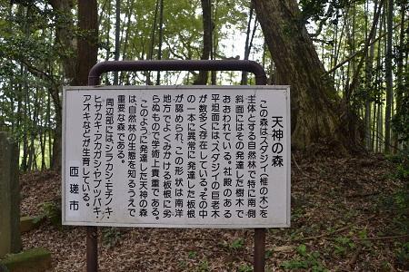20120605飯高寺24