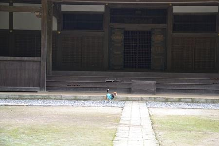 20120605飯高寺20