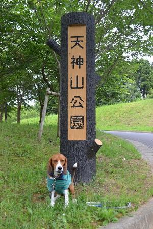 20120605天神山公園02