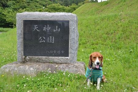 20120605天神山公園01