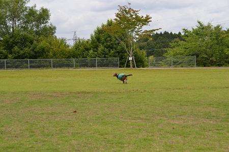 20120605天神山公園07
