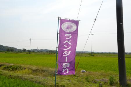 20120615ラベンダー04
