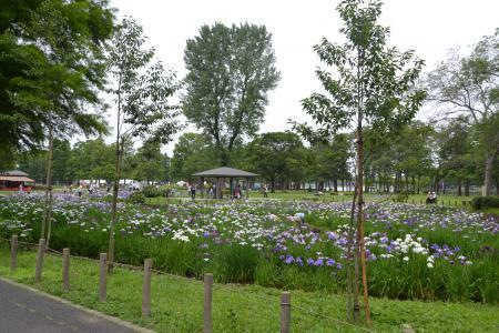 20120615水元公園05