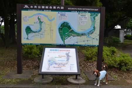 20120615水元公園14