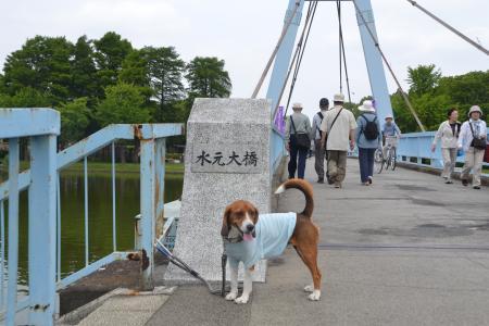 20120615水元公園13