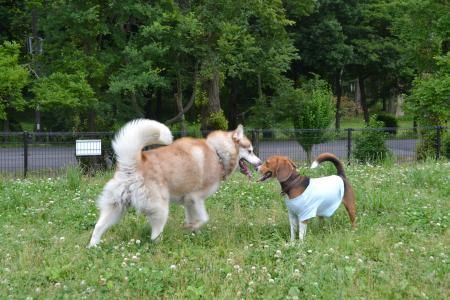 20120615水元公園ドッグラン12