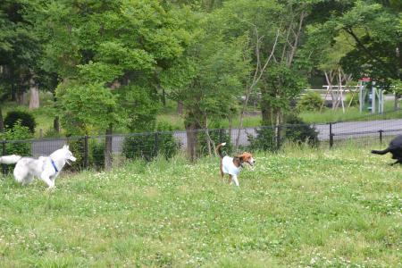 20120615水元公園ドッグラン07