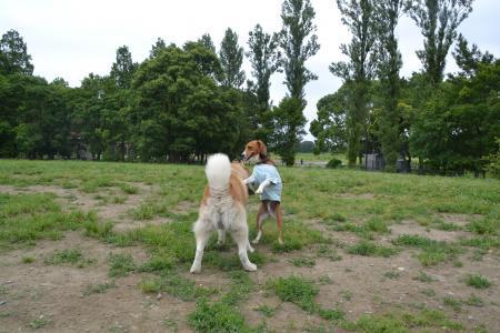 20120615水元公園ドッグラン15