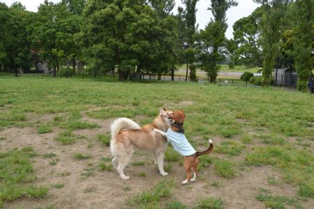 20120615水元公園ドッグラン14