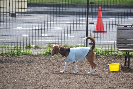 20120615舎人公園ドッグラン06