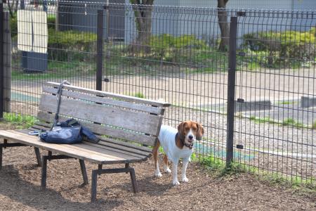20120615舎人公園ドッグラン05