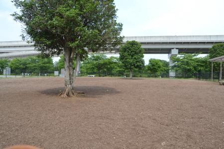 20120615舎人公園ドッグラン04