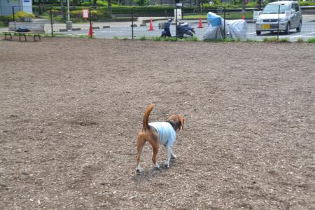 20120615舎人公園ドッグラン03