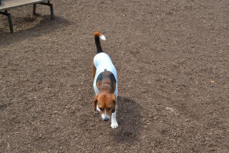 20120615舎人公園ドッグラン02