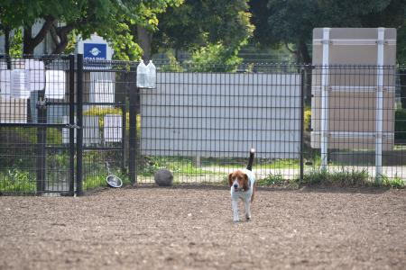 20120615舎人公園ドッグラン10