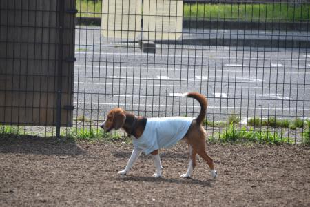 20120615舎人公園ドッグラン07