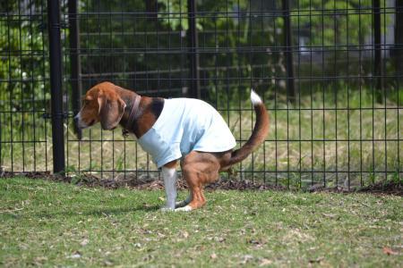 20120615舎人公園ドッグラン18