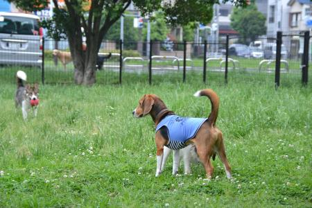 20120619篠崎公園ドッグラン04