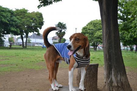 20120619篠崎公園ドッグラン12
