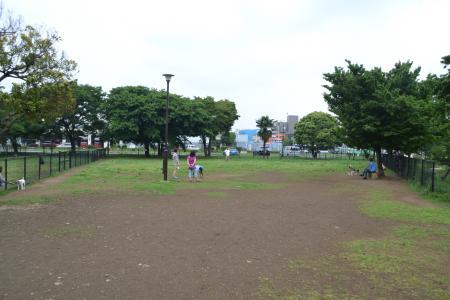 20120619篠崎公園ドッグラン10