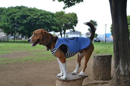 20120619篠崎公園ドッグラン13