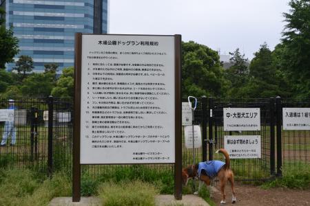 20120619木場公園ドッグラン02