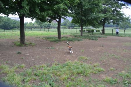 20120619木場公園ドッグラン12