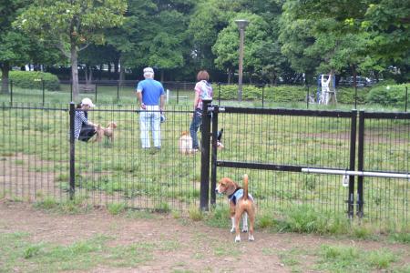 20120619木場公園ドッグラン11