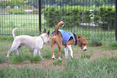 20120619木場公園ドッグラン08