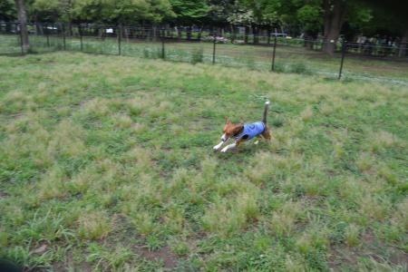20120619木場公園ドッグラン13