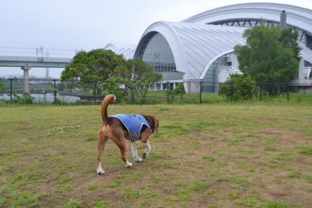 20120619辰巳の森海浜公園14