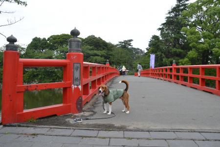 20120623小田原城06