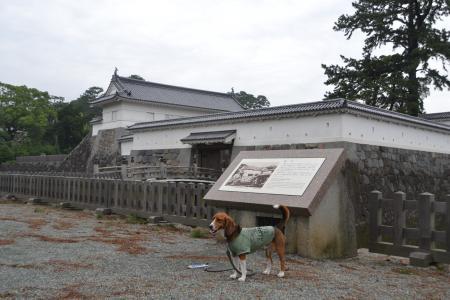 20120623小田原城03