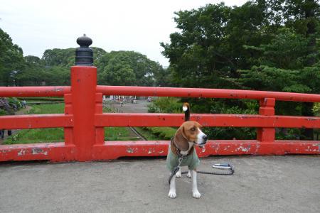 20120623小田原城11