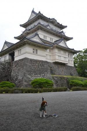 20120623小田原城15