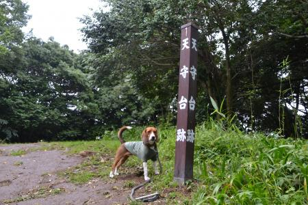 20120623石垣山一夜城28
