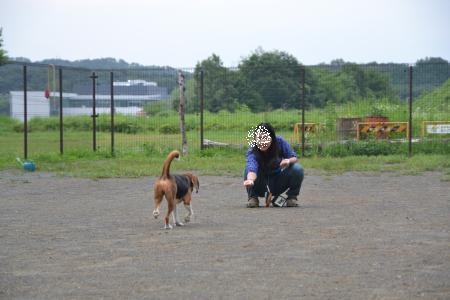 20120628七国ドッグラン14