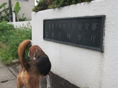 20120707散歩&ドッグカフェ07