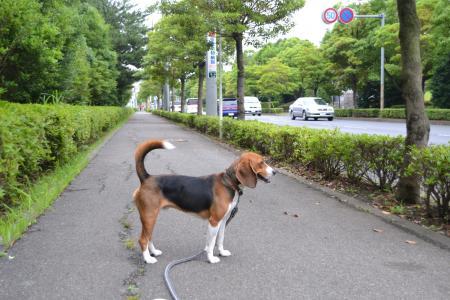 20120707散歩&ドッグカフェ15