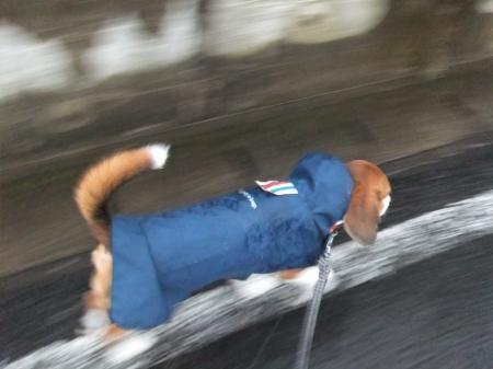 20120714雨の散歩05