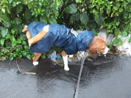 20120714雨の散歩06