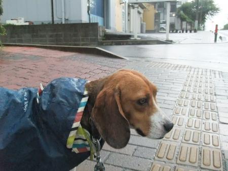 20120714雨の散歩04