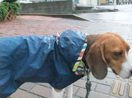 20120714雨の散歩03