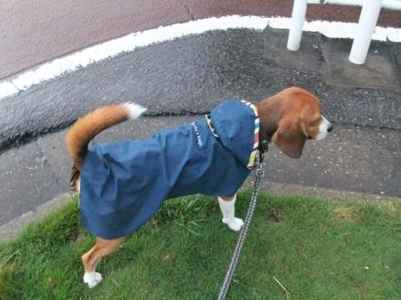 20120714雨の散歩01