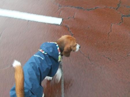 20120714雨の散歩02
