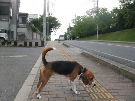 20120718夕方の散歩06